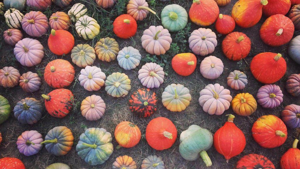 zucche azienda agricola radici felici