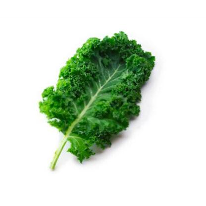 Kale biologica dell'orto artigianale di Radici Felici